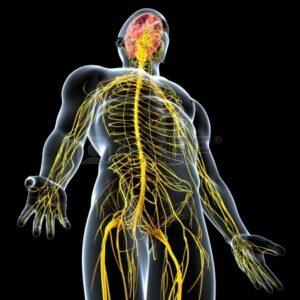 Антидепрессанты и нервная система