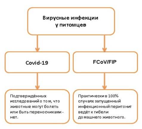 домашние животные и коронавирус